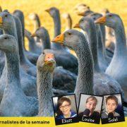 Comment traiter la grippe aviaire ?